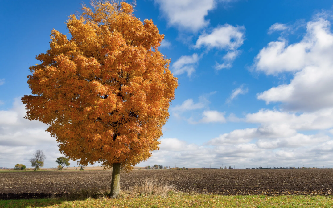 Fall tree and field