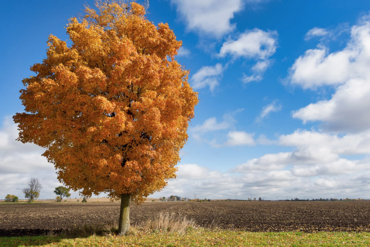 Embracing the fall season through photography