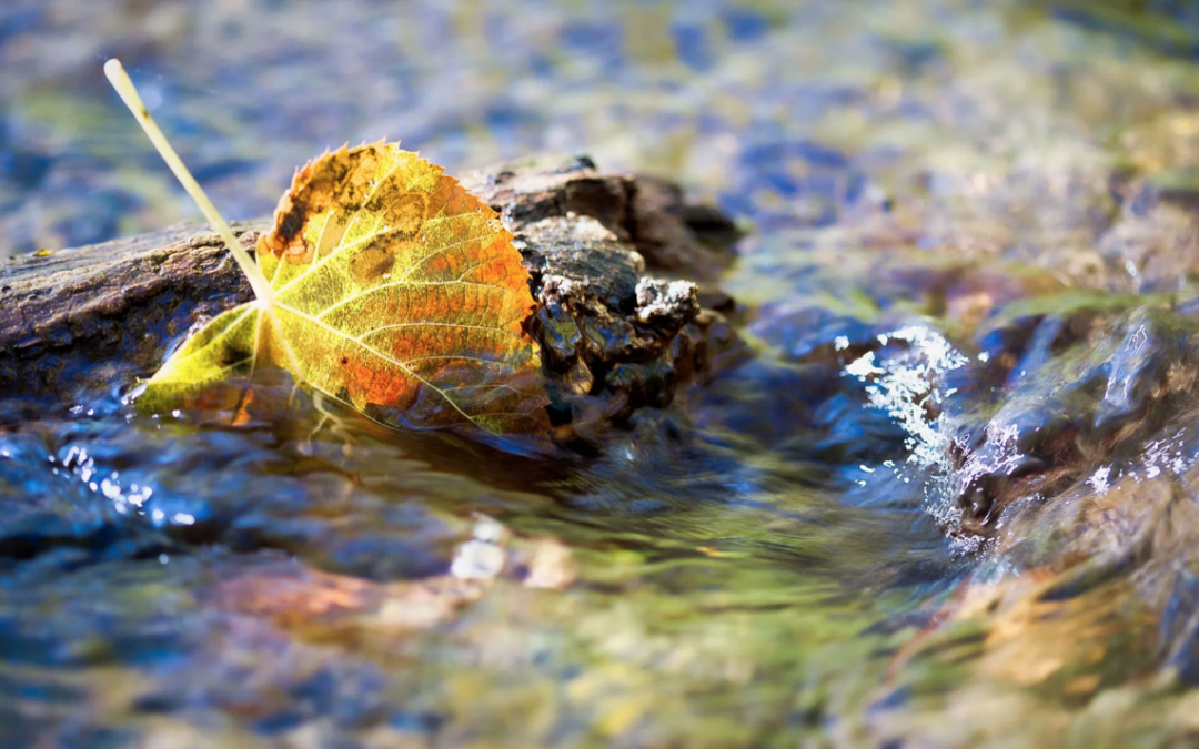 Photographing fall leaves with your macro lens outdoors